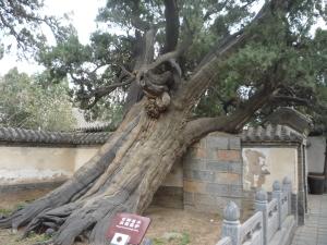 Xi'an and Henan 471