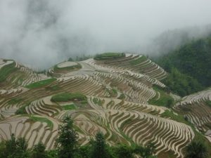 Longji Rice Terraces.