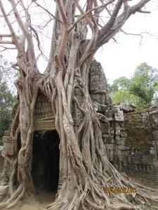 Harbin and Camboda 2014 1223